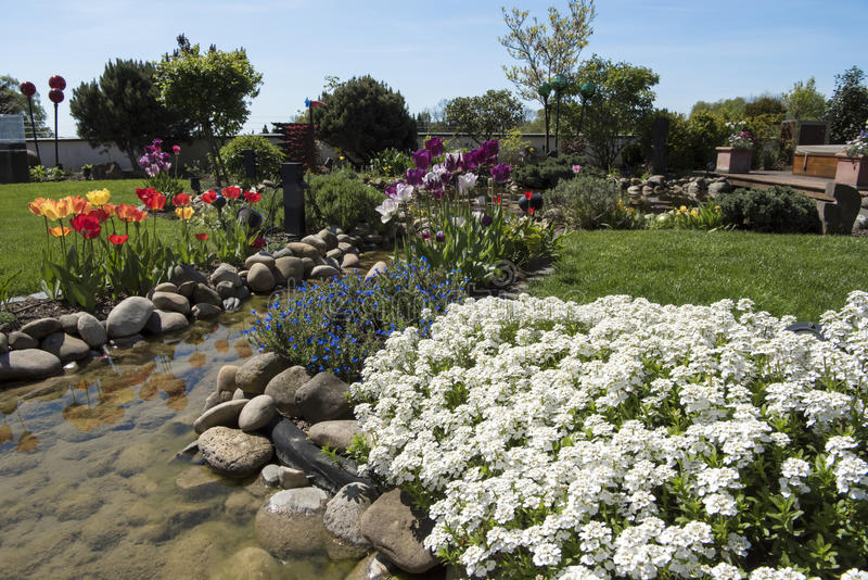 Spring in beautiful garden, tulips and saxifrage flowering on garden creek royalty free stock image
