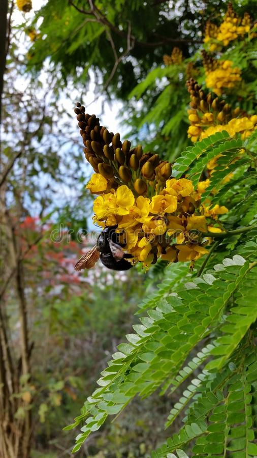 Spring bee stock photography