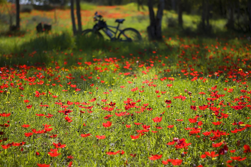 Spring bicycle trip stock photos