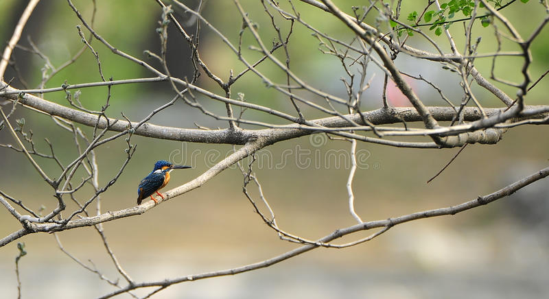 Download Spring bird stock photo. Image of background, feathers - 24348570