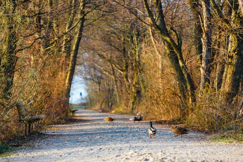 Bird reserve in near Kolobrzeg, Poland. Spring in a bird reserve in near Kolobrzeg, Poland stock image