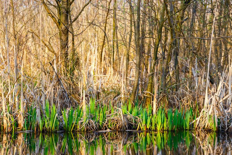 Bird reserve in near Kolobrzeg, Poland. Spring in a bird reserve in near Kolobrzeg, Poland royalty free stock photos