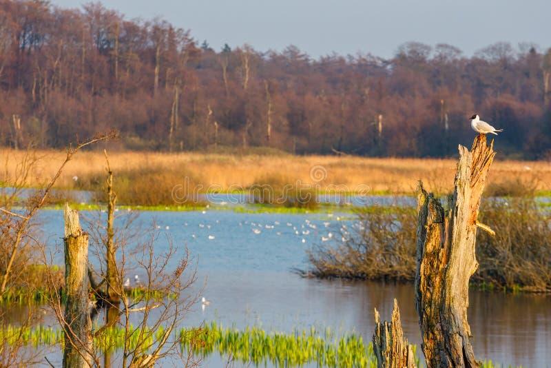 Spring in a bird reserve in near Kolobrzeg. Poland royalty free stock photo