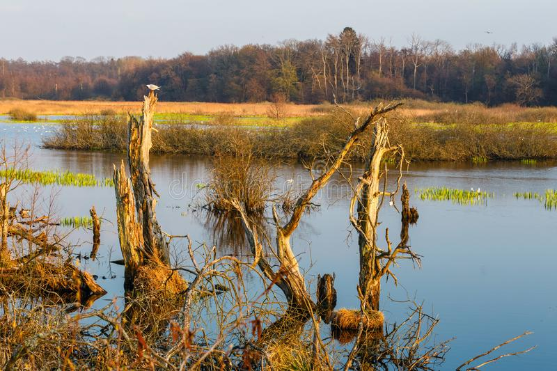 Spring in a bird reserve in near Kolobrzeg. Poland royalty free stock image