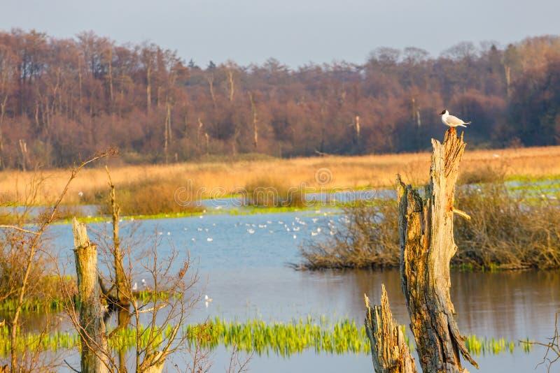 Bird reserve in near Kolobrzeg, Poland. Spring in a bird reserve in near Kolobrzeg, Poland stock photo