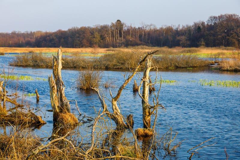 Bird reserve in near Kolobrzeg, Poland. Spring in a bird reserve in near Kolobrzeg, Poland stock photos