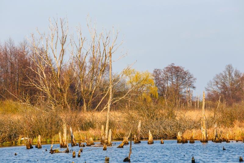 Spring in a bird reserve in near Kolobrzeg. Poland royalty free stock photography