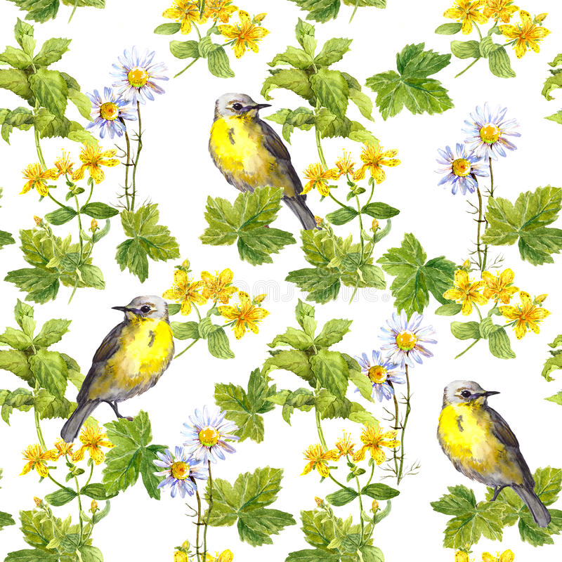Spring birds, meadow flowers, wild herb. Seamless pattern. Water color. Cute spring birds in meadow flowers and wild herb. Seamless pattern. Water color royalty free stock photos