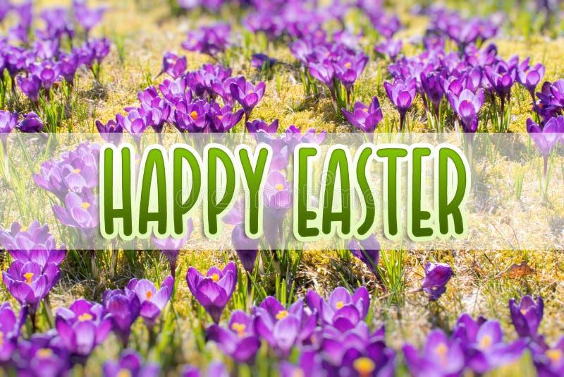 Spring bloemen in zonlicht op Gelukkige Pasen Openlucht Aard royalty-vrije stock afbeeldingen
