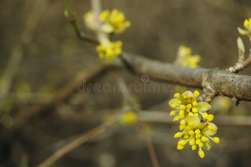 Spring bloom stock photography