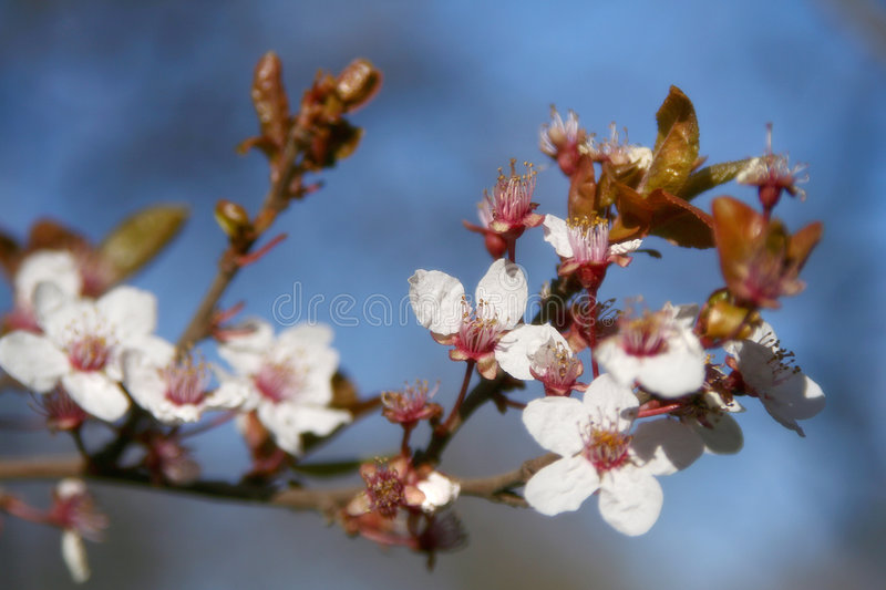 Spring bloom stock images