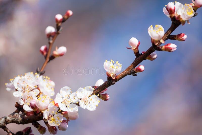 Spring bloom royalty free stock photos