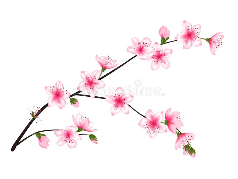 Spring bloom tree branch with pink flowers vector illustration