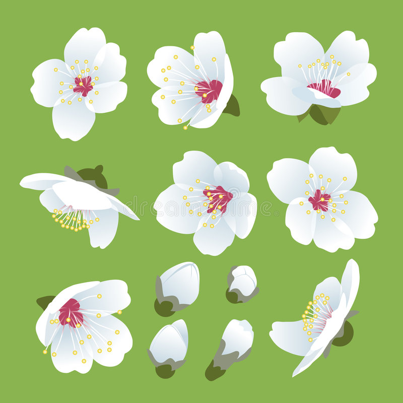 Download Spring Blooming Stock Photo - Image: 4519100