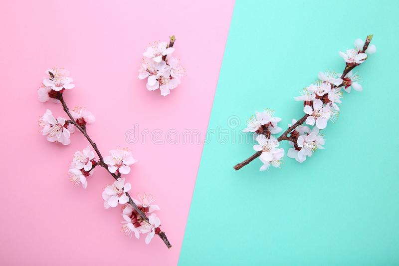 Willow catkins on a blue wooden background with copy space, easter stock photo