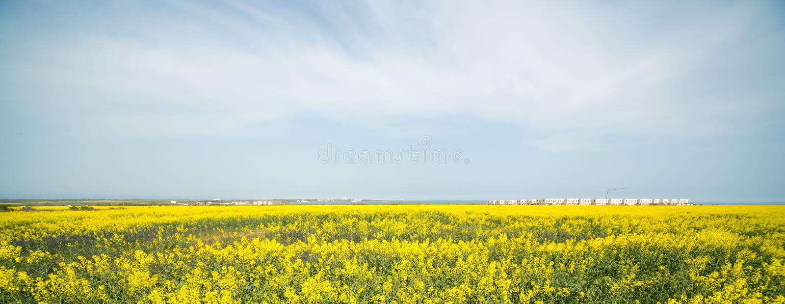 Spring. Blooming rape, Bulgaria. Bulgaria - occupies a leading position among the Balkan countries on the cultivation of grapes and sunflowers, the production of royalty free stock images