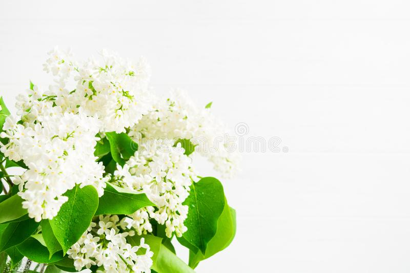 Spring blooming of white beautiful lilac for decoration. Copy space. Light photo in high key. Spa decoration blank for text. Nature royalty free stock photo