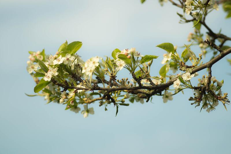 Spring blooms on tree branch stock photo