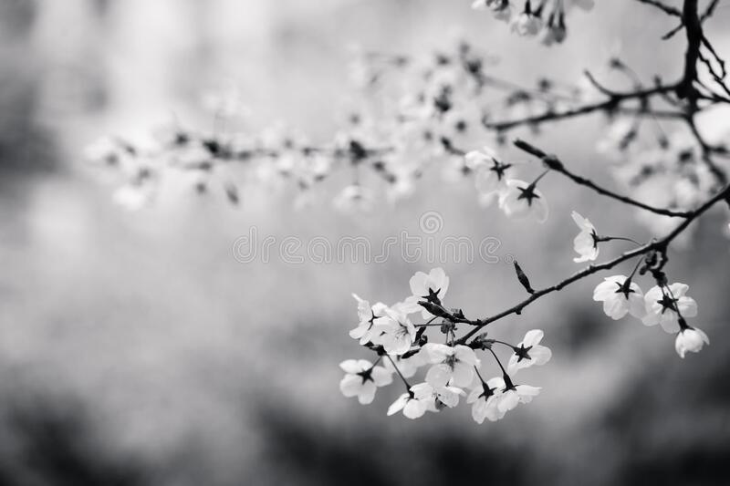 Spring blooms on tree stock photo