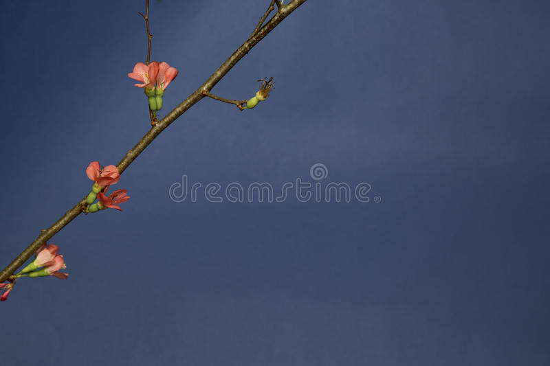 Spring blooms on tree royalty free stock images