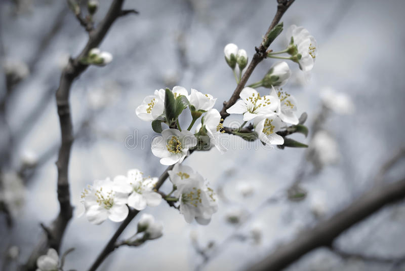 Download Spring blossom stock image. Image of nobody, purity, spring - 28200091