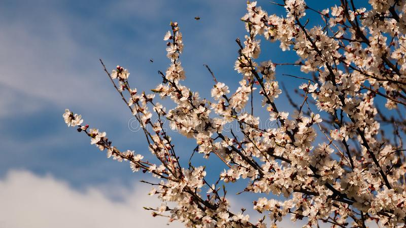 Spring blossom background. Beautiful nature scene with blooming tree and sun flare. Sunny day. stock photography