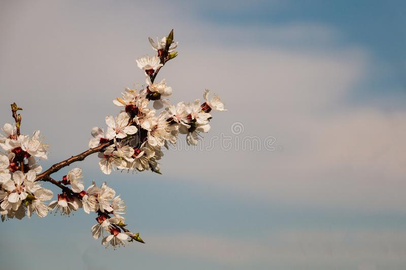 Spring blossom background. Beautiful nature scene with blooming tree and sun flare. stock images