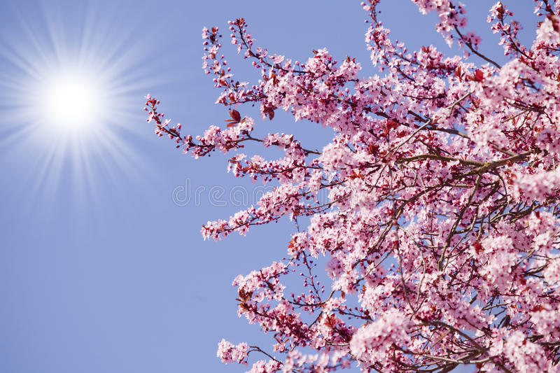 Download Spring blossom background stock photo. Image of fruit - 39504398