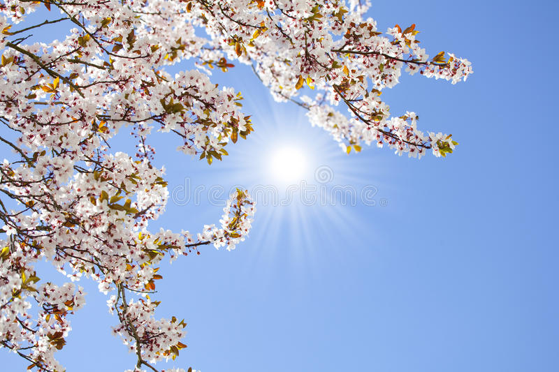 Download Spring blossom background stock image. Image of blossom - 39504557