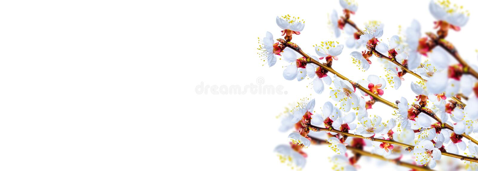 Download Spring blossom stock image. Image of selective, life - 39513151