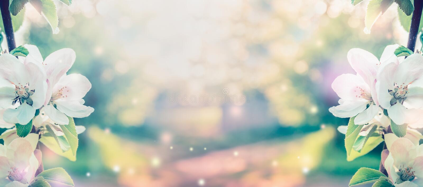 Spring blossom over blurred nature background with sunshine, banner. Retro toned stock images