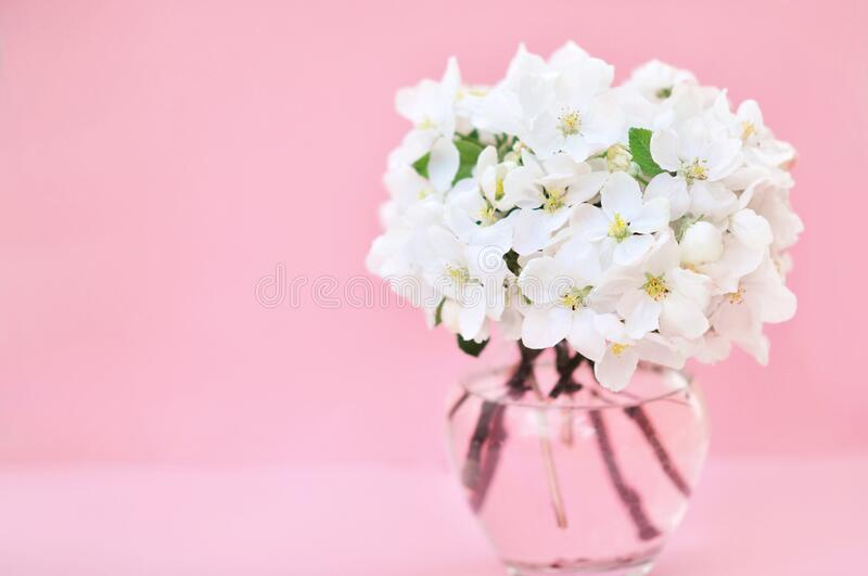 Spring blossom/springtime apple bloom, flower posy background. Pastel and soft floral card, toned stock image