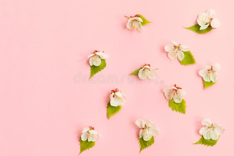 Spring blossom. springtime apple bloom, pink flowers background, pastel and soft floral card, selective focus, royalty free stock photography