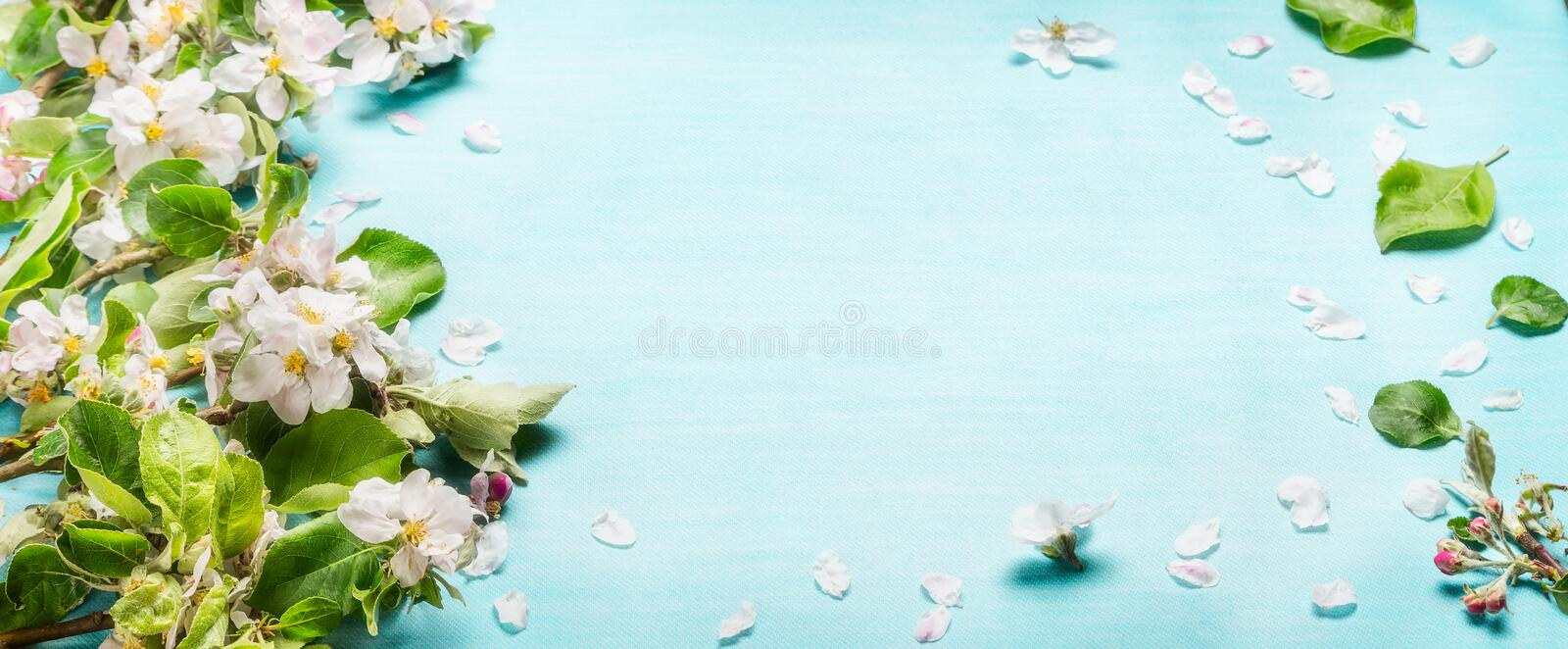 Spring blossom twigs on blue turquoise background, top view, banner. Springtime stock photography