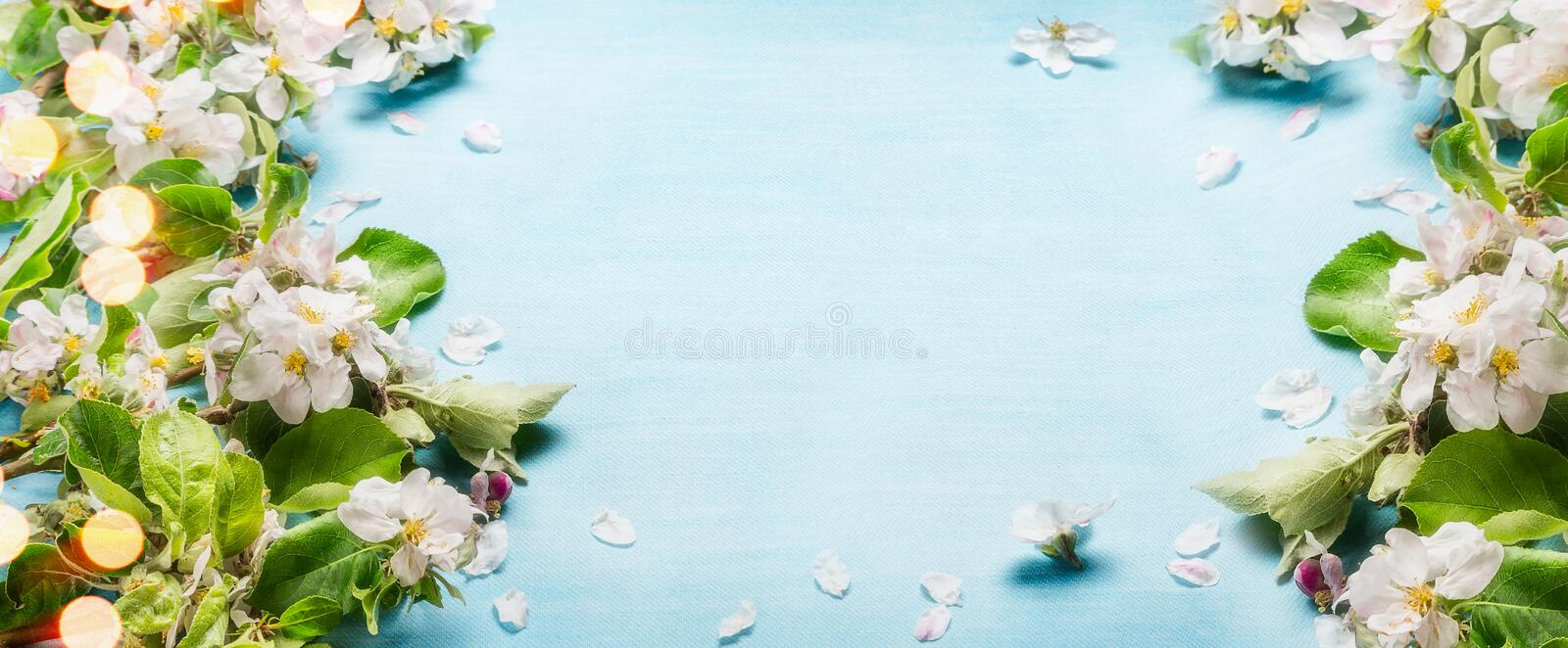 Spring blossom twigs on blue turquoise background, top view, frame, border Springtime. Concept stock photo