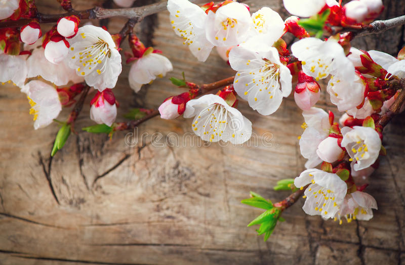 Spring blossom on wooden background royalty free stock images