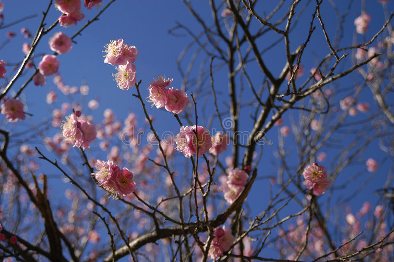 Download Spring blossoms stock photo. Image of flora, fresh, spring - 14686