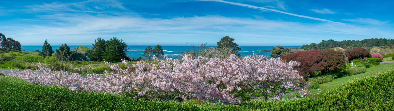 Spring Blossoms Mendocino Coast royalty free stock photo