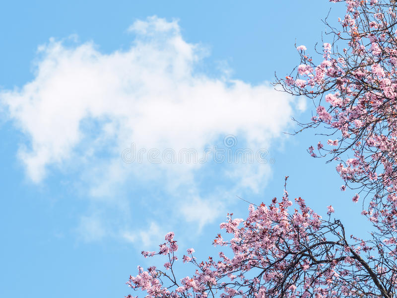 Spring blossoms and sky stock photography