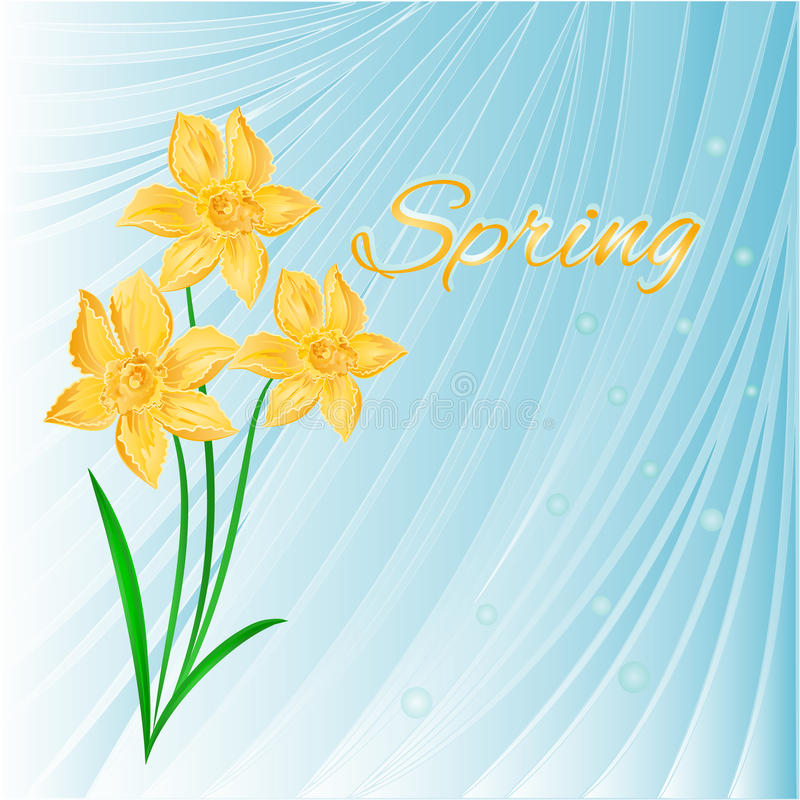 Spring blue background with Daffodils vector. Spring blue background with Daffodils and dewdrops, vector illustration vector illustration