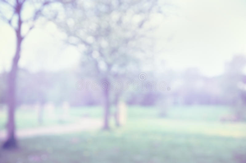 Spring blurred park, nature background. Toned stock photography