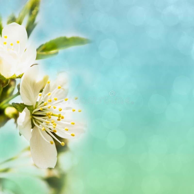 Spring Bokeh Royalty Free Stock Photography