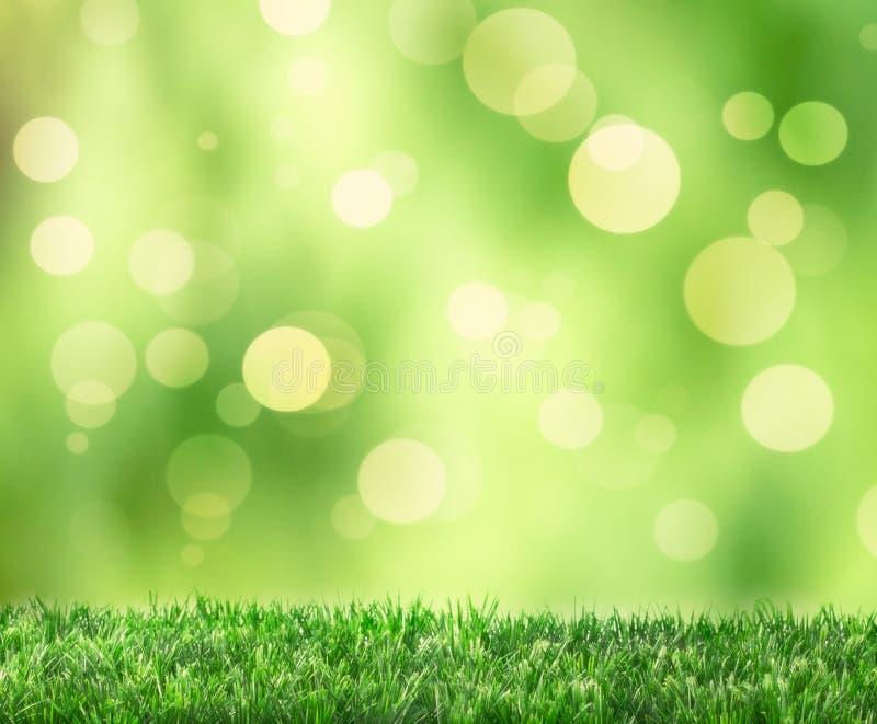 Download Spring Bokeh stock image. Image of grass, grow, lawn - 36644075