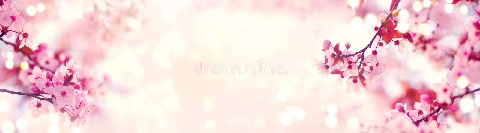 Spring border or background art with pink blossom. Beautiful nature scene with blooming tree. And sun flare stock photo