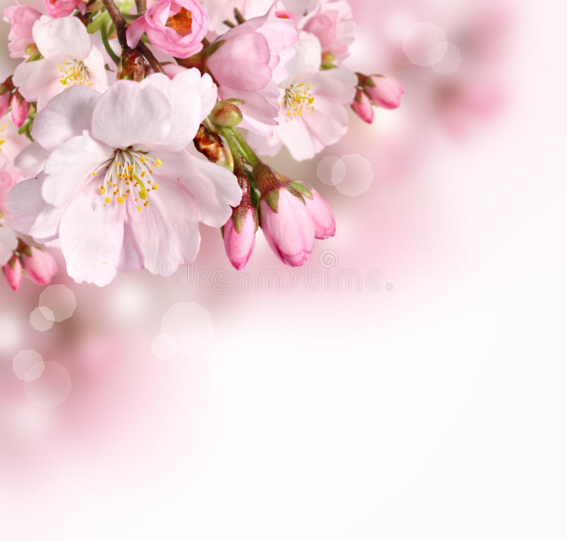 Free Spring Border Background With Pink Blossom Royalty Free Stock Image - 28880676
