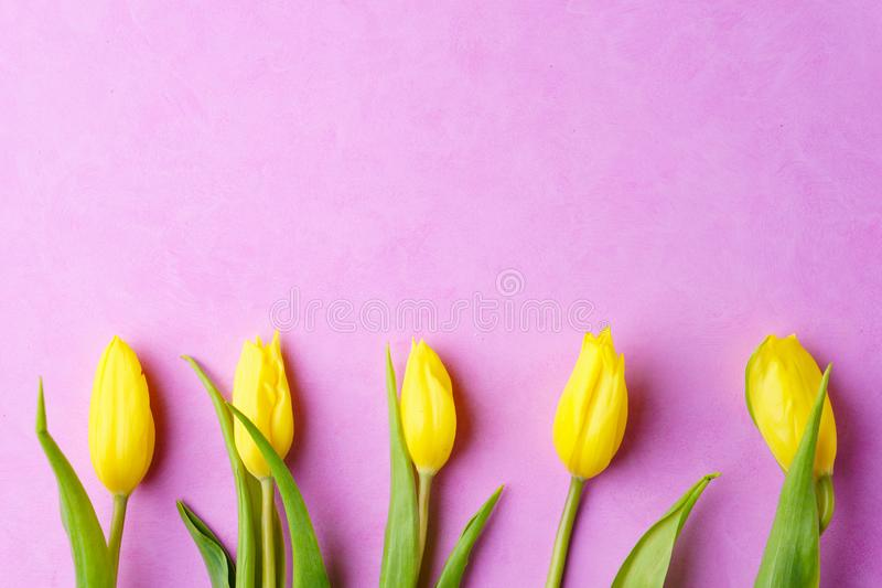 Spring border or background with yellow tulips stock photography