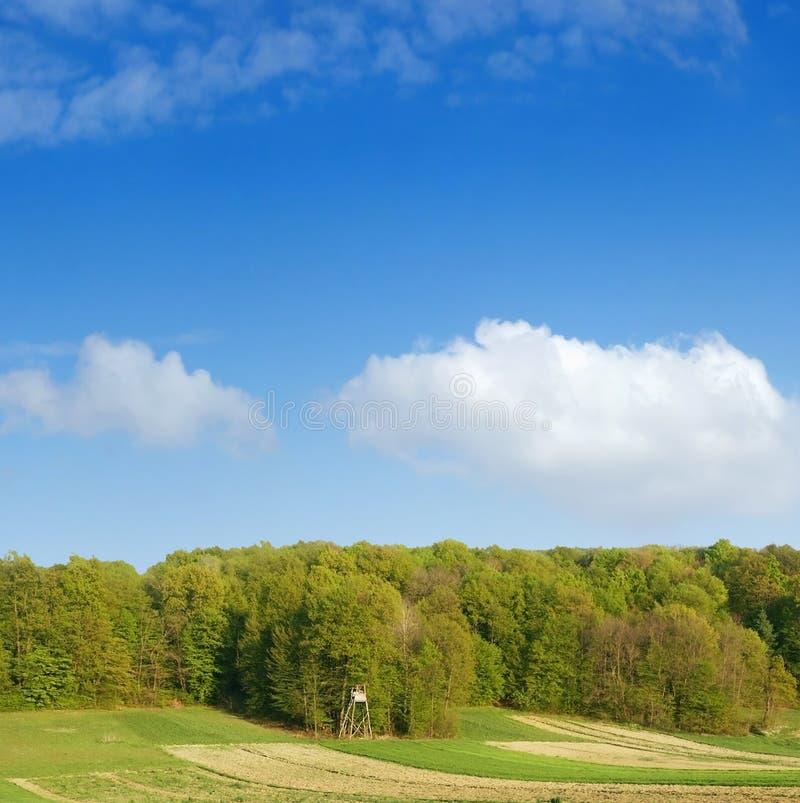 Spring bos over blauwe hemel 7 op stock foto