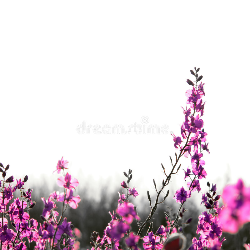 Download Spring Bouquet Royalty Free Stock Photos - Image: 4081368