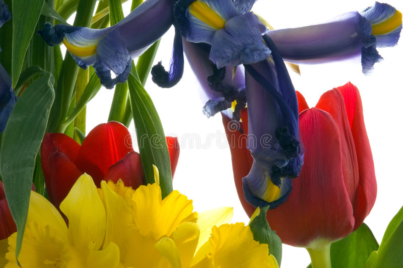 Download Spring Bouquet stock image. Image of tulips, happiness, leaves - 90257