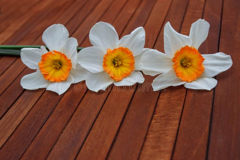Spring bouquet for congratulations stock photography